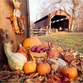 Harvest Sampler Pack