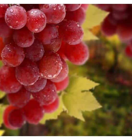 Grape flavour e-liquid