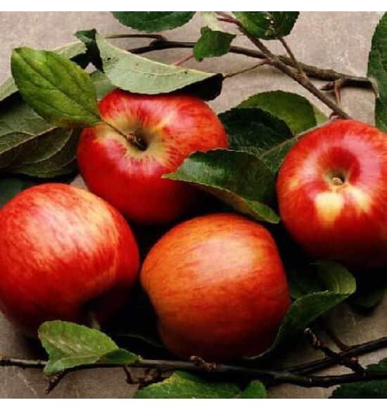 Red Apple Flavour E-Liquid