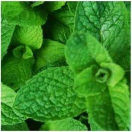 WINTER GREEN flavour e-liquid