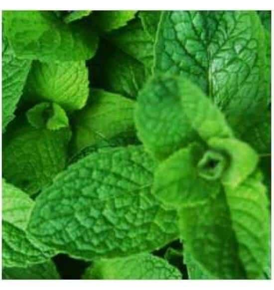 Wintergreen flavour e-liquid